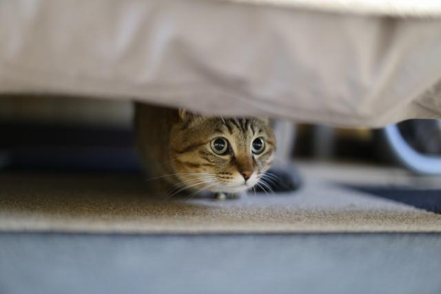 物陰から威嚇する猫