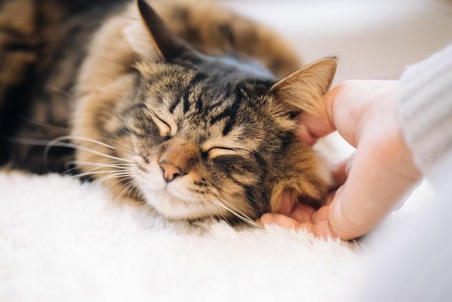 首を撫でられている猫