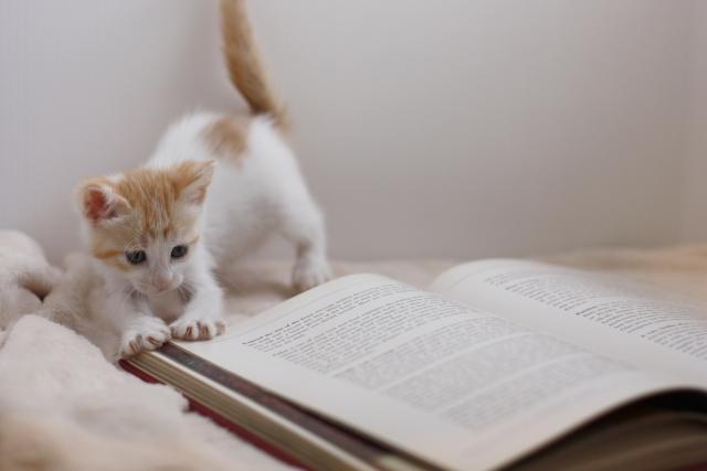 本で遊ぶ猫