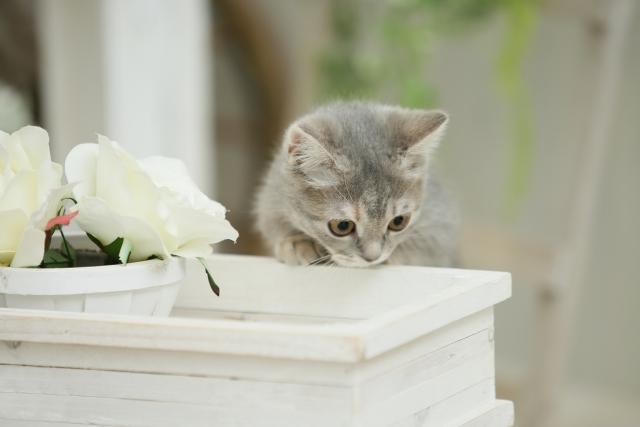 臭いをかぐ猫