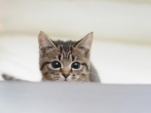 狙っている子猫