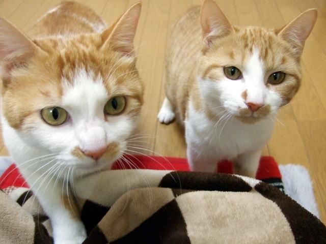 近づいてくる2匹の猫