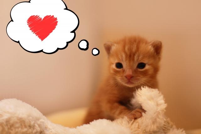 喜んでいる猫