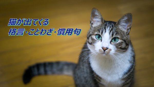 猫の格言・ことわざ・慣用句