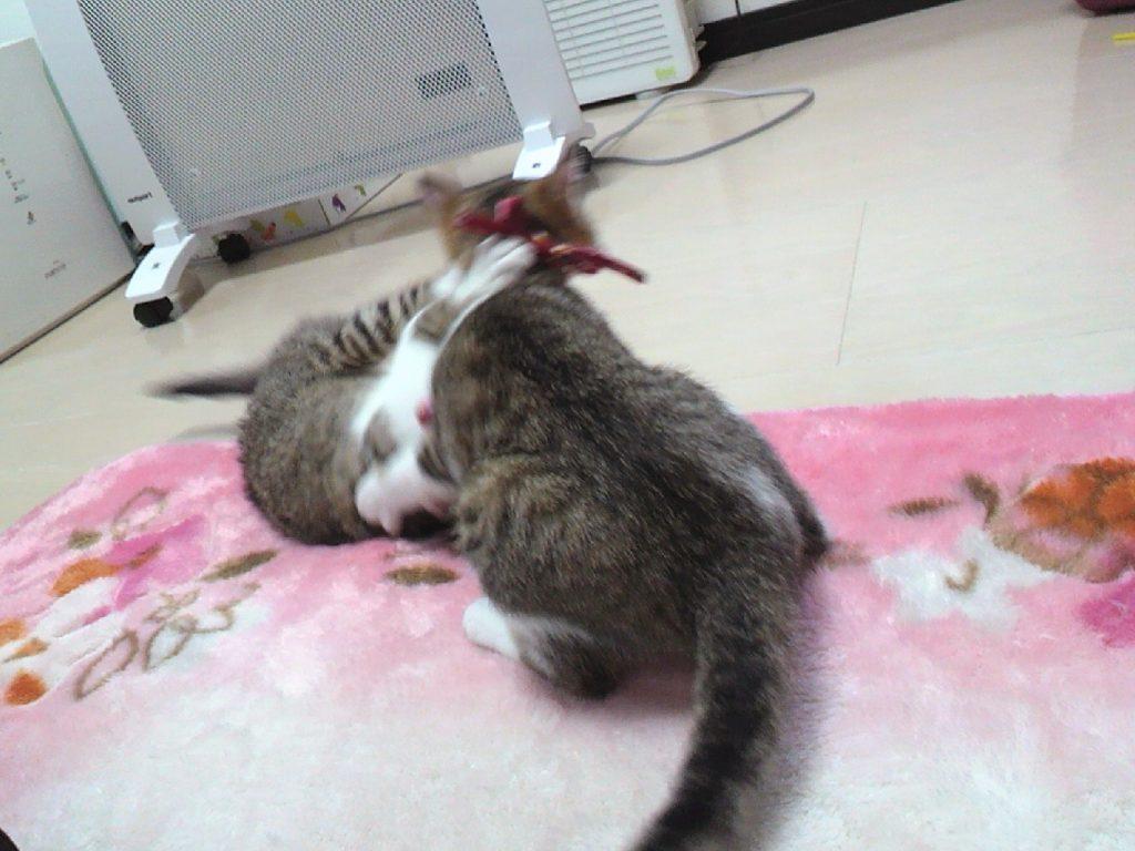 取っ組み合いをする子猫時代のりんかとらんか