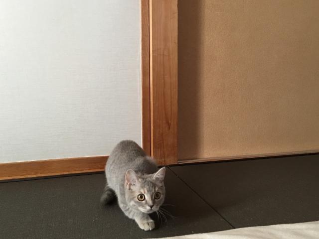 何かを狙ている猫