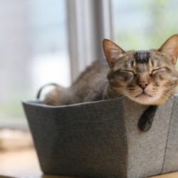 かごに入ってくつろぐ猫