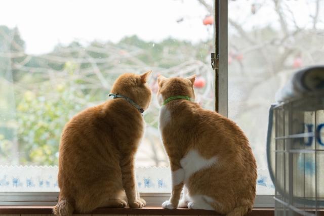 窓の外を眺める2匹の猫
