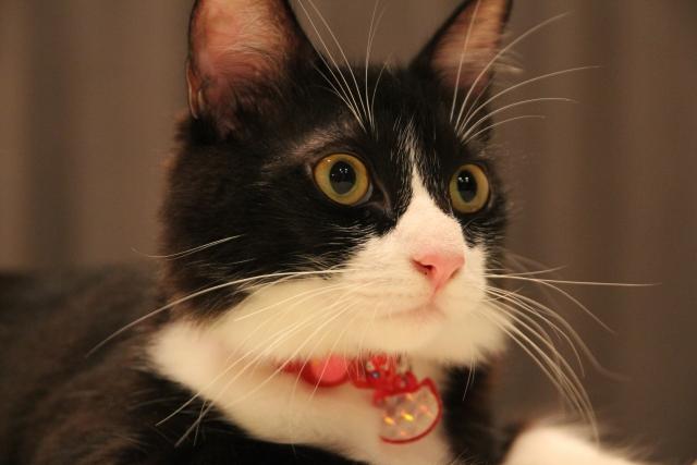 猫のひげ まゆげ