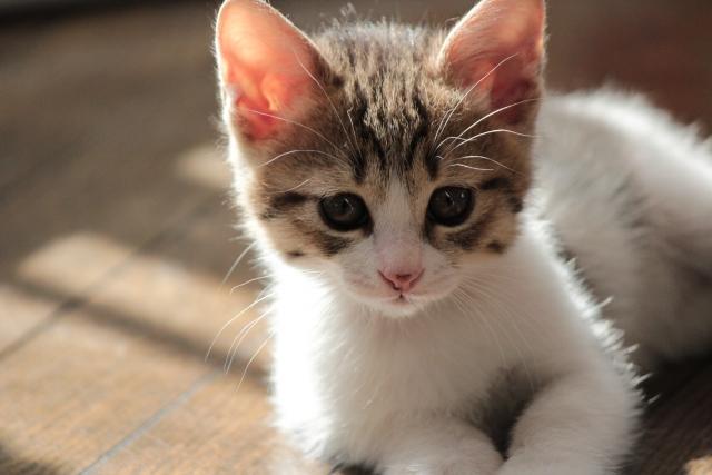 日向ぼっこする子猫