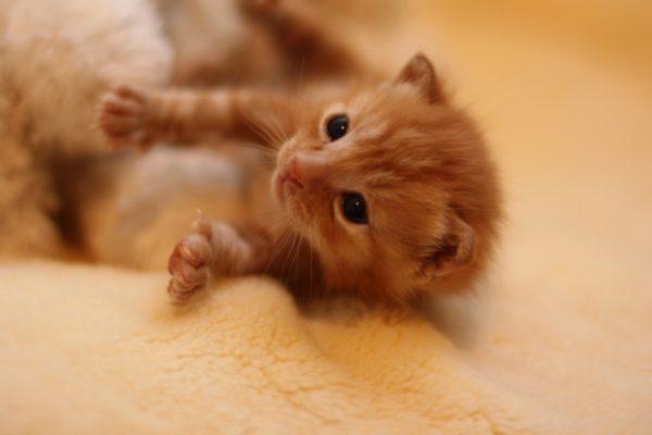 前足を伸ばして見つめる子猫