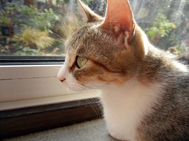 外を見て寛ぐ猫