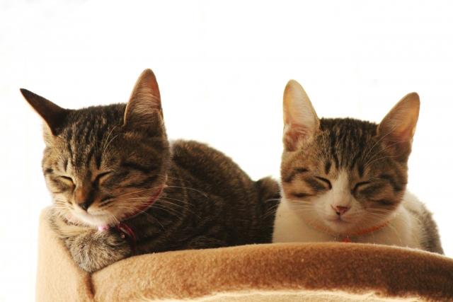 ベットで寝ている猫たち