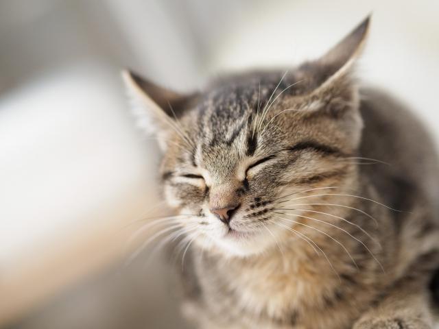 座りながら寝ている猫