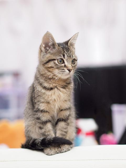 しっぽ巻き座りしている猫
