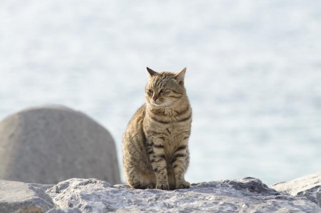 エジプト座りしている猫