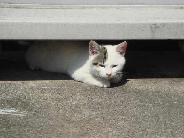 狭いところで気持ちよく寝ている猫