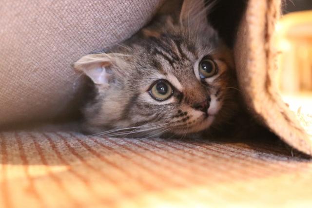 狭いところに隠れる猫