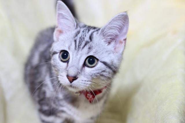 上目遣いで見つめる猫