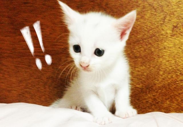 驚く猫 びっくりする猫