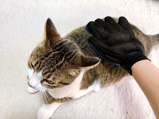 猫 ブラッシング グルーミンググローブブラシ 使用画像
