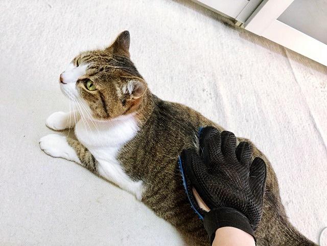 猫 ブラッシング グルーミンググローブブラシ 着画