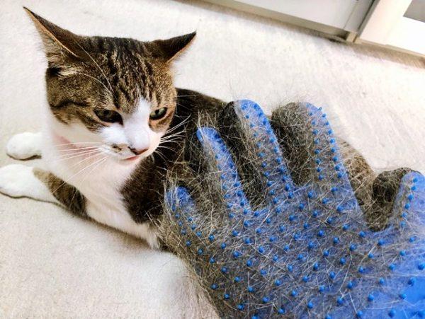 猫 ブラッシング グルーミンググローブブラシ