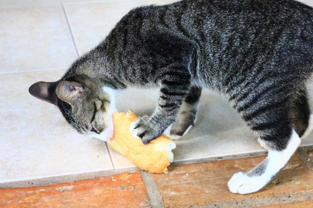 パンを食べている猫