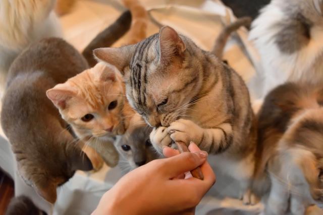 ご飯をもらう子猫たち