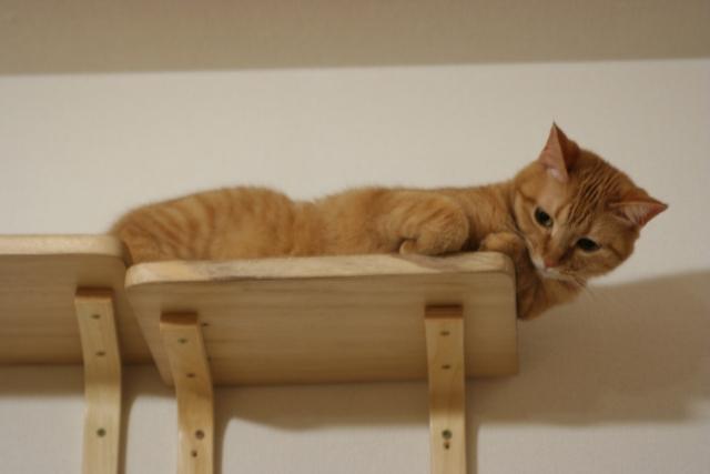 高いところに避難する猫