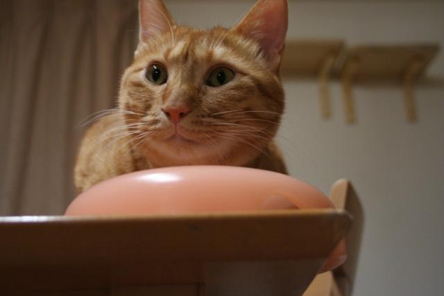 猫 手作りチーズ