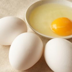 猫 生卵 卵