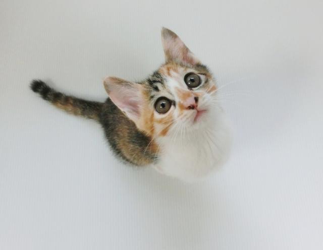 上を見上げる子猫