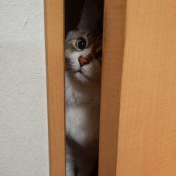 ネコ ドアから脱走しようとする猫