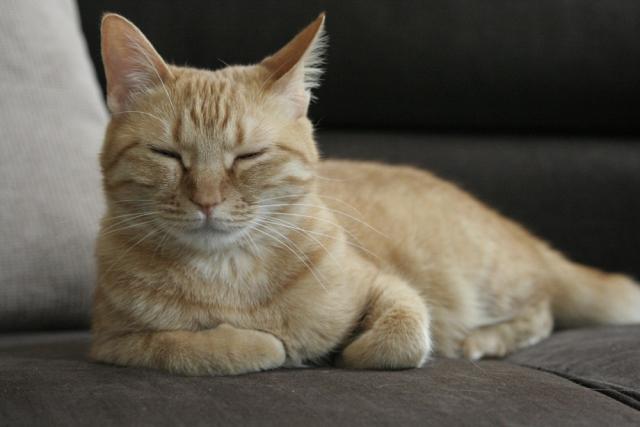 猫 ネコ 変な顔をしている猫