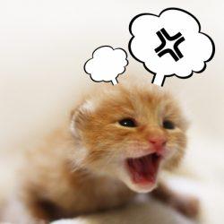 猫 ネコ イライラする猫