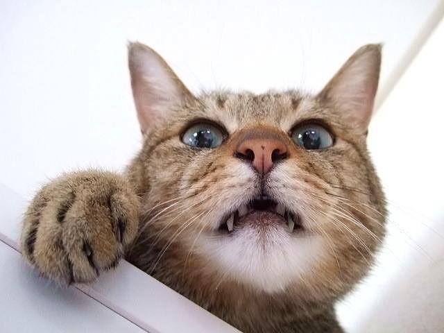猫 ネコ フレーメン