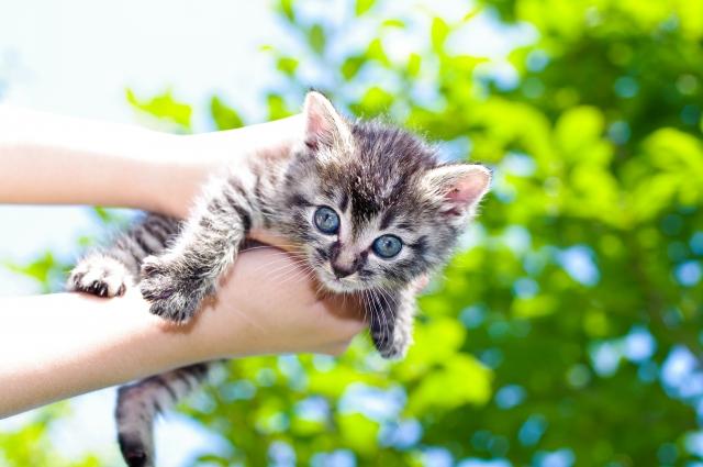 猫 ネコ 抱っこされてしっぽを振っている猫