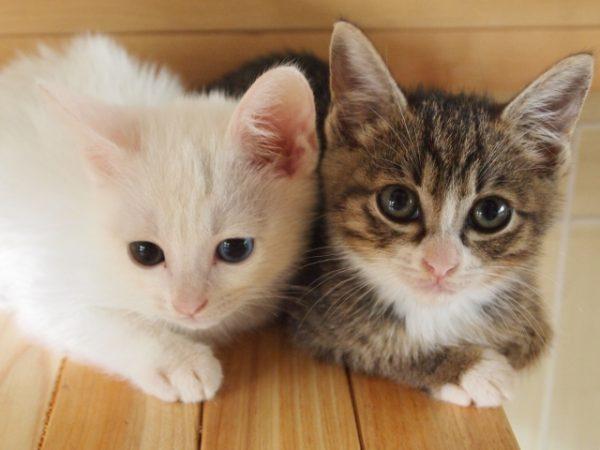 猫 ネコ 猫を飼うときに必要なものとは 子猫