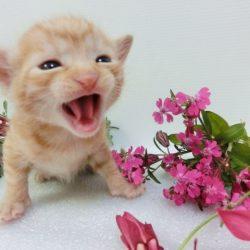 猫 ネコ 猫の鳴き声