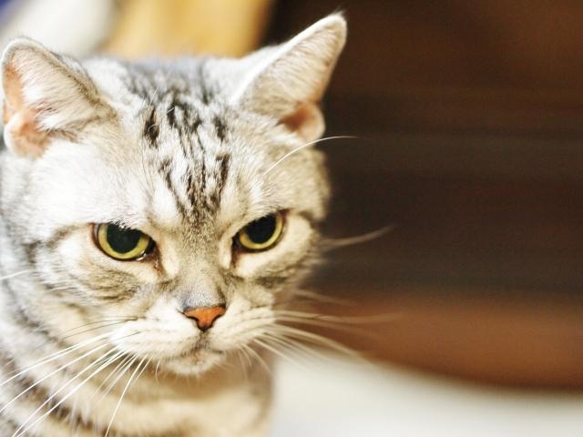 猫 ネコ 猫のひげ