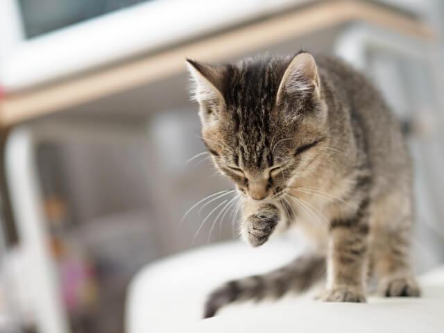 猫 ネコ 水