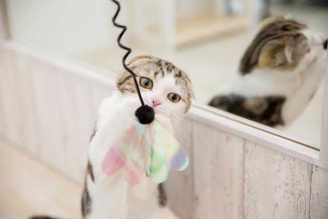 猫 ネコ おもちゃで遊ぶ猫