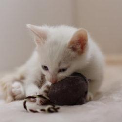 猫 ネコ 狩りをする猫