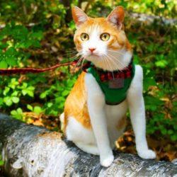 猫 ネコ 散歩して寛いでいる猫