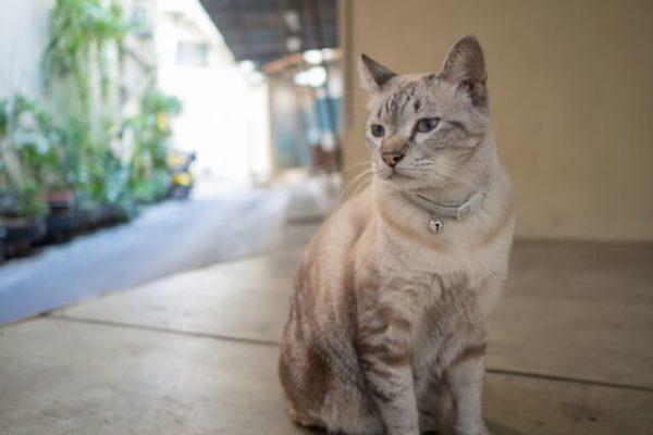 猫 ネコ マーキングする猫