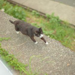 猫 ネコ トイレの後 走る猫