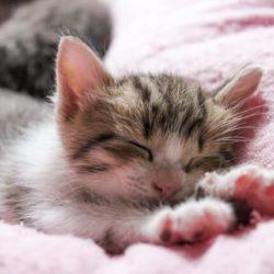 猫 ネコ ふみふみする猫