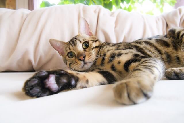 猫 ネコ 寛ぐ猫