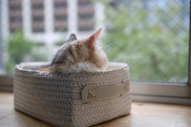 猫 ネコ 箱に入って寛ぐ猫